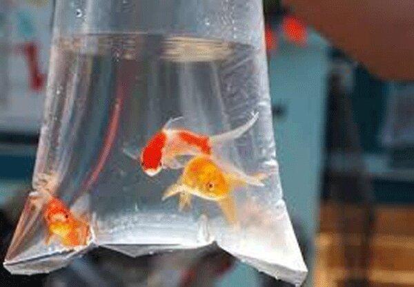 جمع آوری غرفه های عرضه ماهی و تزئینات نوروزی
