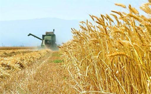 17 درصد گندمکاران پول خود را نگرفته اند