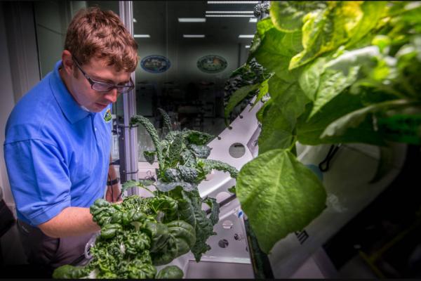 ناسا یک قدم به یافتن موثرترین راه آبیاری گیاهان در فضا نزدیک شد