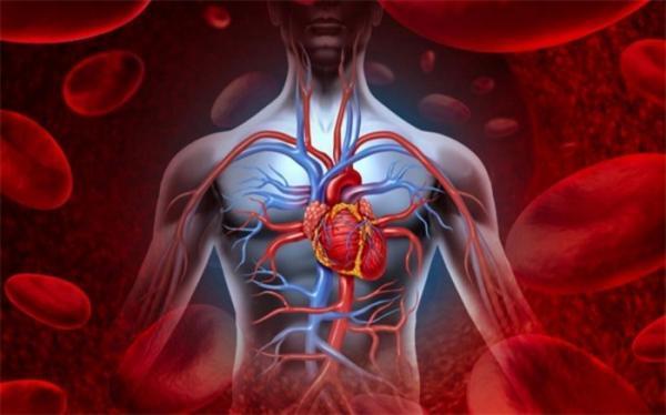 غذایی برای بهبود جریان خون!